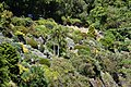 Dunedin Botanic Garden 05.jpg