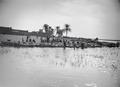 ETH-BIB-Markt am Niger (Reisernte)-Tschadseeflug 1930-31-LBS MH02-08-0495.tif