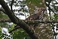 Eagle and prey1 - Lip Kee.jpg