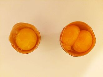 Yolk - Image: Egg and maxi egg 2