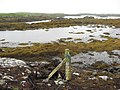 Eileann Chairminis, West Harris - geograph.org.uk - 559013.jpg