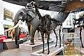 Em - Megaloceros giganteus female - 4.jpg