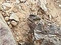 Empremtes fòssils a Montjuïc.jpg