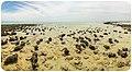 Endless Stations 107 - Stromatolite Daydream.jpg