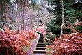 Escaliers en Forêt de Fontainebleau.jpg