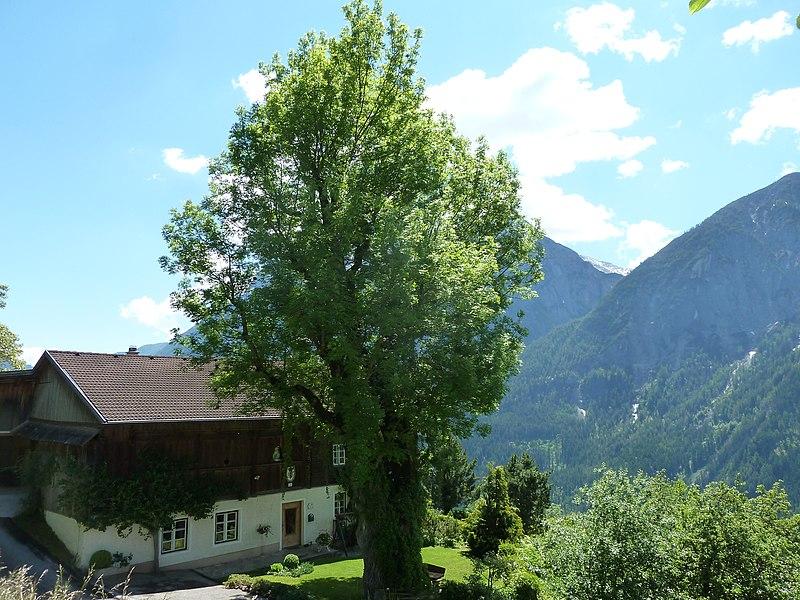 File:Esche in Schrottendorf.JPG