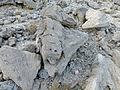 Ethiopie-Danakil-Fossiles (5).jpg