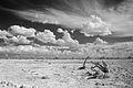 Etosha landscape (3688062226).jpg