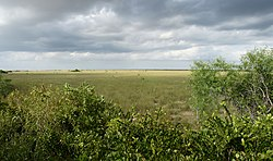 Everglades (Sea of grass).jpg
