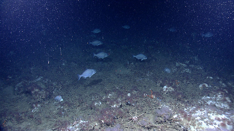 File expl7086 9734689925 jpg wikimedia commons for Ocean floor description