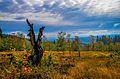 Farben des Sauerlandes - Nordhelle, Ebbegebirge (10327784933).jpg