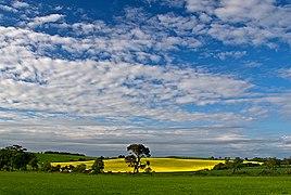 Farmland near Torr Forret (geograph 2991724).jpg