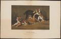 Felis tigris - 1875 - Print - Iconographia Zoologica - Special Collections University of Amsterdam - UBA01 IZ22100093.tif