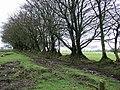 Field boundary near Okehampton Camp - geograph.org.uk - 348345.jpg