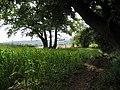 Fields near Barlaston - geograph.org.uk - 533427.jpg