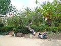 Figuera del parc de les Aigües P1500824.jpg