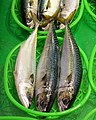 Fish - Omicho Ichiba - Kanazawa, Japan - DSC09644.jpg