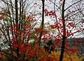 Flickr - Duncan~ - Autumn ^5.jpg