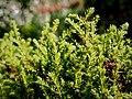 Flora at Munnar Rose Gardens 1.jpg