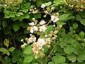 Flora della Riserva Naturale Valle dell'Aniene 5.JPG