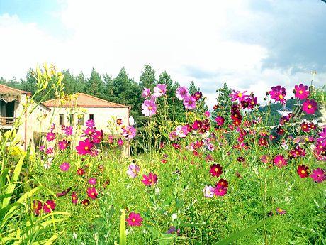 Flora of Lori Province, ArmAg (1).jpg