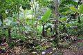 Floresta Magia Das Àguas 6.jpg