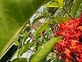 Flower.5 HDR.jpg