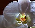 Flower 0131.jpg