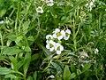 Flowercluster8.jpg
