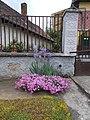 Flowers, Rózsa Street, 2020 Mogyoród.jpg