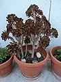 Flowers.... - panoramio (2).jpg