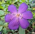 Flowers - Uncategorised Garden plants 221.JPG