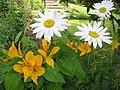 Flowers along the roadside (1) - geograph.org.uk - 1394730.jpg