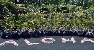 Aloha - Flowers arranged to make the word aloha