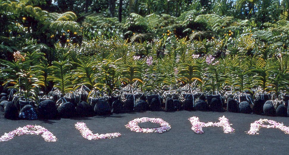 Flowers arranged to ALOHA, Hilo, Hawaii
