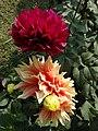 Flowers in Garden - Victoria Memorial - Kolkata - India (12249492334).jpg