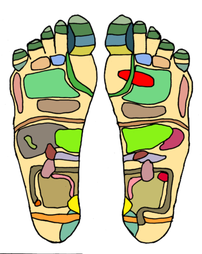 This shows the reflex zones found on the sole ...