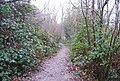 Footpath Through Birch Woods - geograph.org.uk - 1079788.jpg