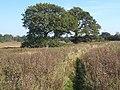 Footpath across flat low-lying ground south of Belstead Brook - geograph.org.uk - 1001583.jpg