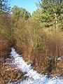 Footpath in Halling Wood - geograph.org.uk - 1118257.jpg
