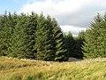 Forest edge - geograph.org.uk - 548991.jpg