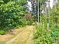 Forst Grunewald - Waldweg (Woodland Path) - geo.hlipp.de - 41377.jpg