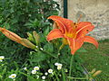 Fotky květů (21).jpg