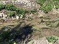 Fuente y lavadero de Berlangas de Roa 12.jpg