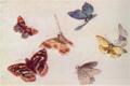 FujishimaTakeji-1900-1906-Notebooks Butterflies-2.png