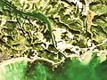 Fukaya Canal Aerial Photograph.jpg