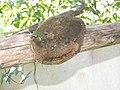 Fungi-108-xavier cottage-yercaud-salem-India.jpg
