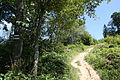 Główny Szlak Beskidzki - Path to Smerek 05.jpg