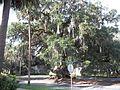 GA Brunswick Old Town HD Lovers Oak01.jpg