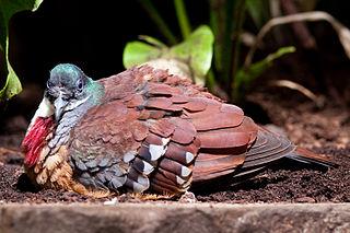 1853 in birding and ornithology